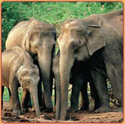 Periyar National Park of South India